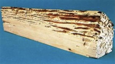 ISOL'INSIDE, traitement charpente, traiement structure bois, parasites du bois